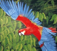 Print Title: The Parrot by Sam Alex